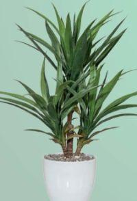 Kunstpflanze Yucca