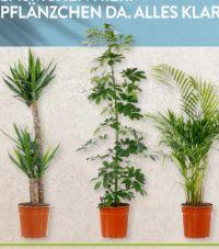Solitärpflanze von Gardenline