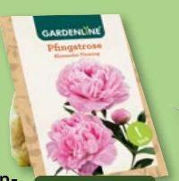 Premium Pfingstrosenknolle von Gardenline