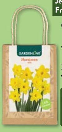 Narzissenzwiebeln von Gardenline
