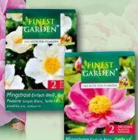 Pfingstrosen Knollen von Finest Garden