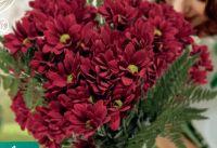 Chrysanthemen-Bund