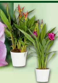 Blütenpflanzen Besonderheiten