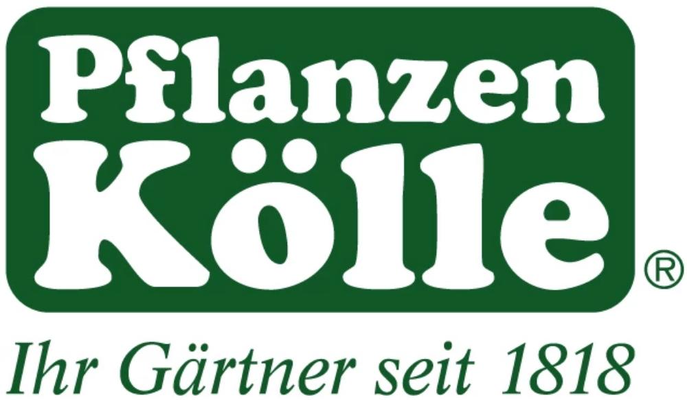 ᐅ Aktuelle Pflanzen Kolle Angebote Aktionen November